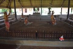 Babi Knorf op Bali 003