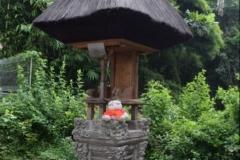 Babi Knorf op Bali 007