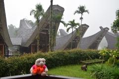 Babi Knorf in Toraja 005