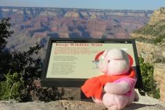 Hooverdam & Grand Canyon 328