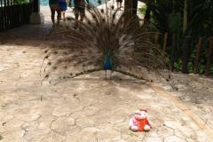 Afbeelding 099 playa del carmen