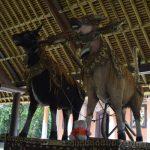 Knorf in Taman Anjung