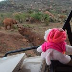 Knorf in Tsavo East and West